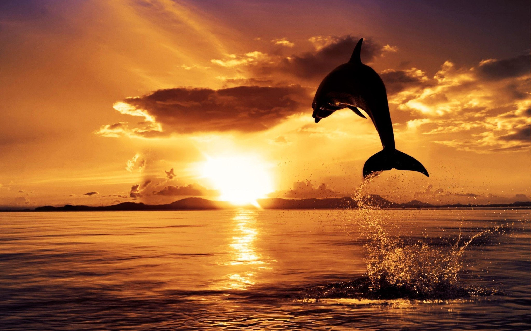 SUNSETS AND TIDAL WAVES--Dolphin-Sunset-2
